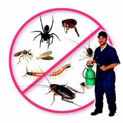 Dịch vụ diệt côn trùng nhanh chóng