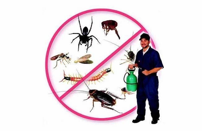 Dịch vụ diệt côn trùng uy tín mang lại hiệu quả cao
